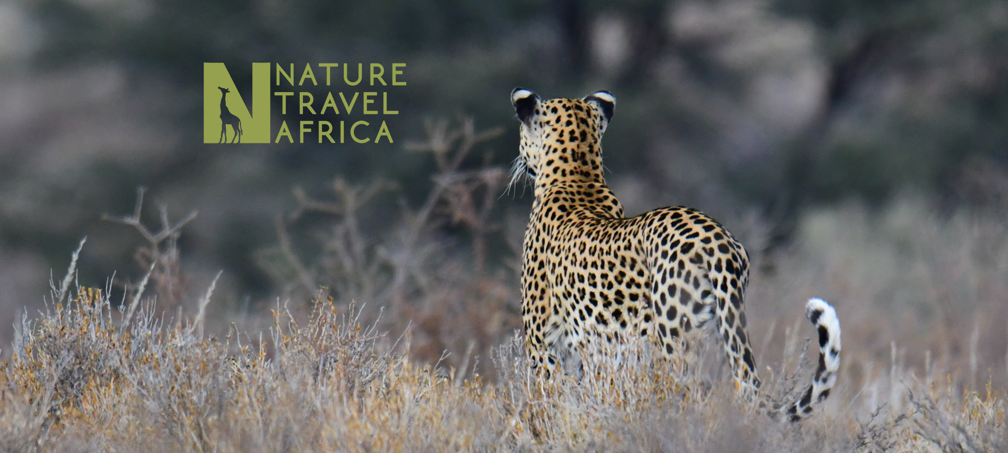 Nature Travel Africa